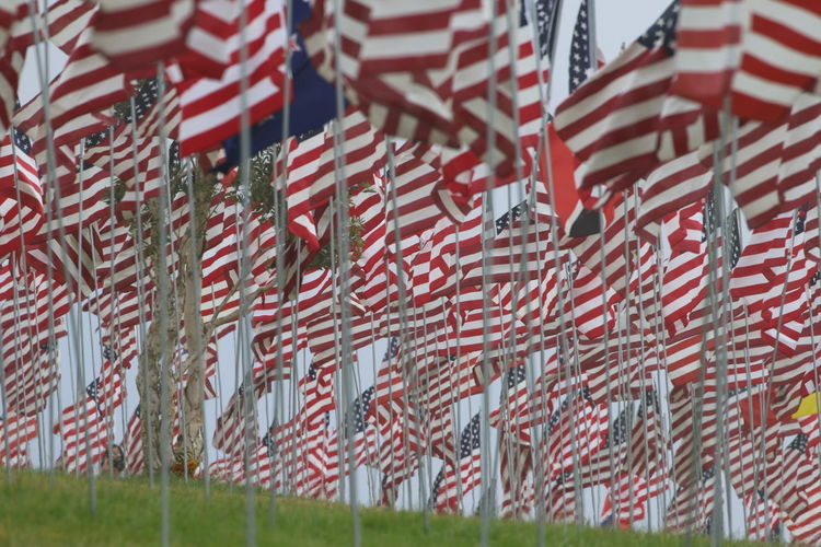 9/11 Memorial Close-up Day Flag Forest Of Flags Low Angle View No People Outdoors Patriotism Red Stars And Stripes Flag US Flag