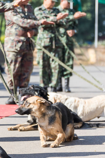 Army soldier with dog, training dogs of war