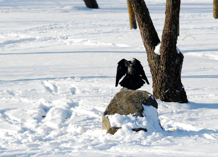 Minsk, Loshica Park Frozen Snow ❄ Winter Animal Themes Animals In The Wild Beauty In Nature Bird Cold Temperature Nature