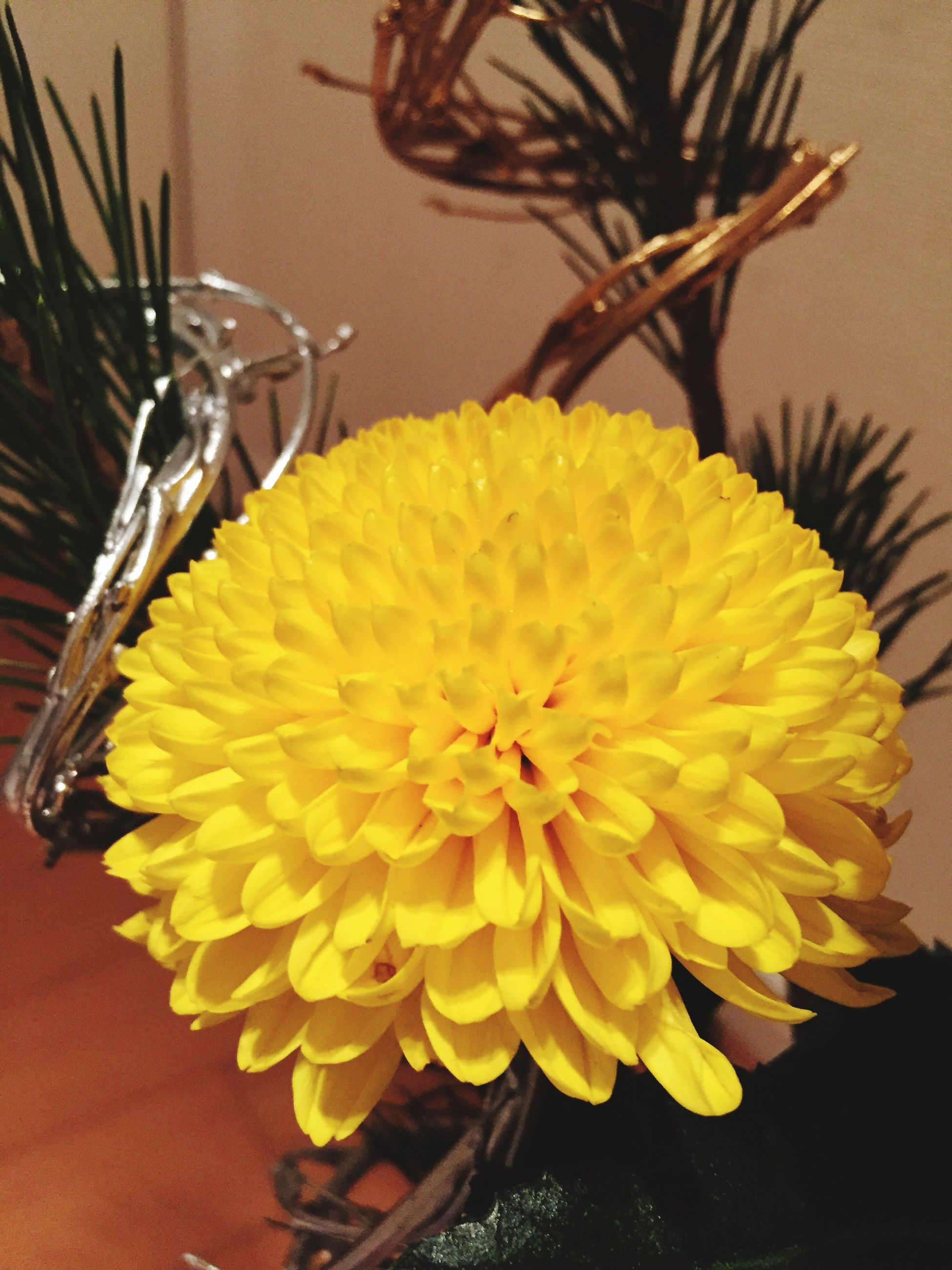 flower, freshness, flower head, yellow, petal, fragility, indoors, close-up, beauty in nature, growth, plant, single flower, table, high angle view, vase, nature, pollen, potted plant, focus on foreground, no people