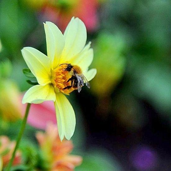 🐝🌼☀ Bee Flowers Summer Park пчела цветок  лето влксм