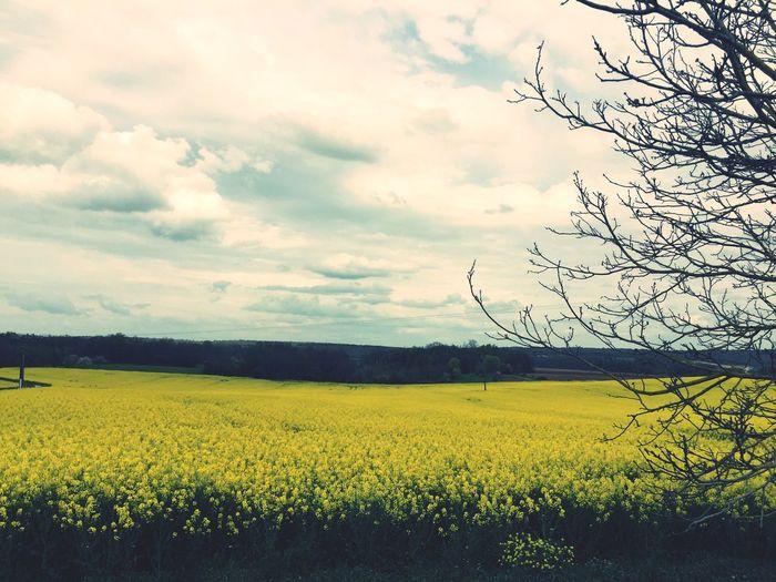"""""""Où que j'aille, je suis un morceau du paysage de mon pays"""" F.A."""