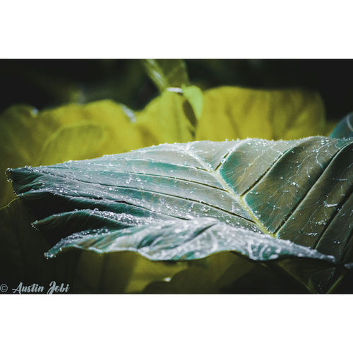 In the greens.. EyeEmNewHere Photograph Selective Focus Photography Themes No People Outdoors Day Photographing#Peramangalam #India #Kerala #nature #texture #leaf #beautiful #flora #paper #pattern #design #bright #decoration #old #abstract Flower Light