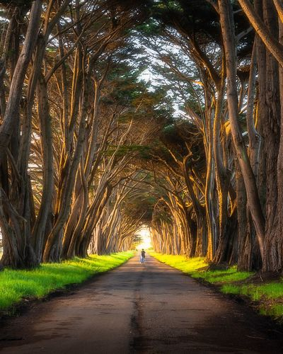 Cypress Tree Tunnel Trees Tree The Way Forward Tree Plant Direction Transportation Road Nature Diminishing Perspective Beauty In Nature Outdoors Green Color Footpath Park