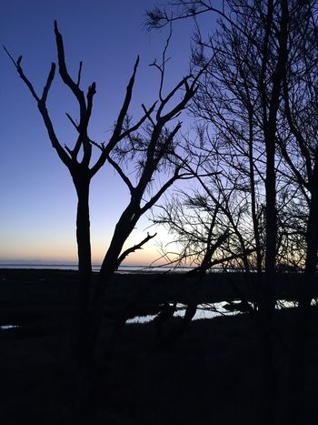 Sunset Strolling River Collection Trees Sky Bright Colors Sunset Silhouettes Nairn Mandurah No Filter, No Edit, Just Photography