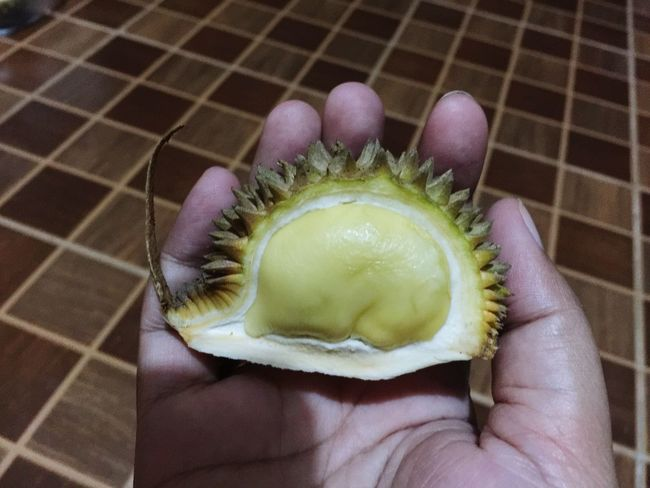 Mini Durian in hand Fruit Thailand Durain King Of Fruit Close-up One Person Human Hand Hand Human Body Part Real People Holding Body Part Indoors  High Angle View Unrecognizable Person Focus On Foreground Lifestyles Finger One Animal Human Finger Green Color Personal Perspective Healthy Eating
