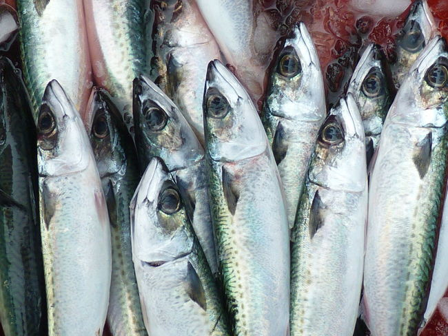Mackerel Abundance Animal Close-up Fish Fish Market Fishing Industry Food Food And Drink For Sale Freshness Full Frame Healthy Eating Ice Large Group Of Objects Mackerel Mackerel Fish Market No People Outdoors Raw Food Retail  Retail Display Seafood Vertebrate Wellbeing