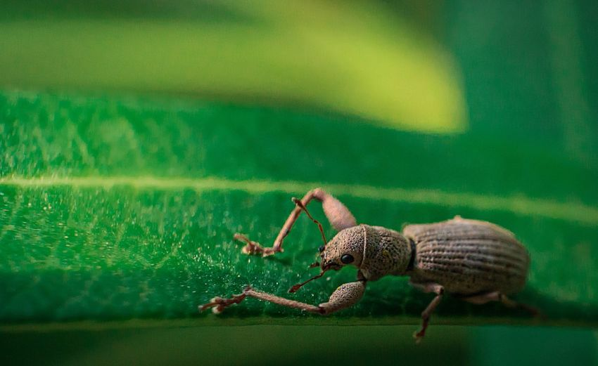 Beetle on a leaf Animal Wildlife One Animal Animal Themes Animal Green Color Animals In The Wild No People Close-up Invertebrate Nature Day Insect Outdoors Side View Full Length Textured  Vertebrate Water