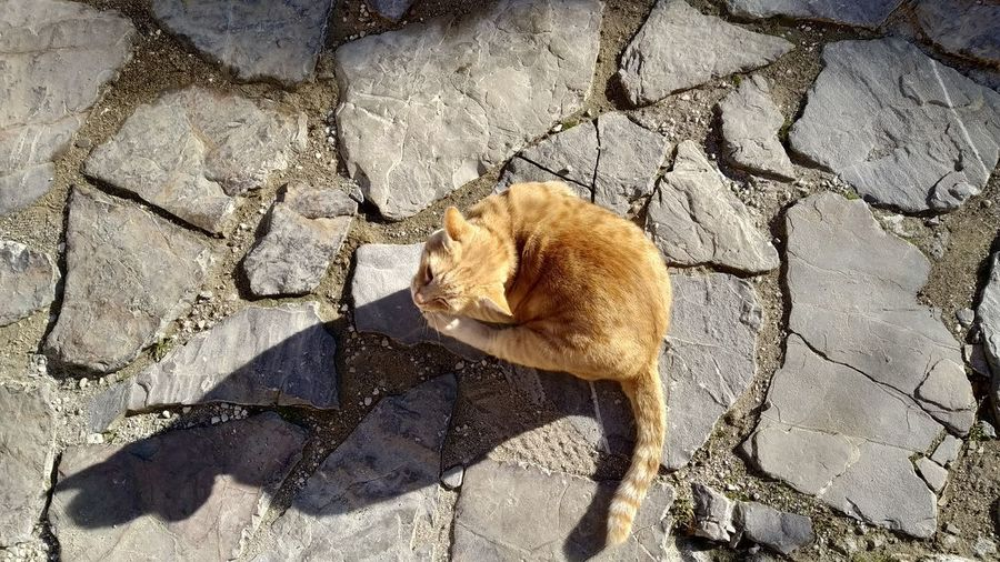 High angle view of cat on rock