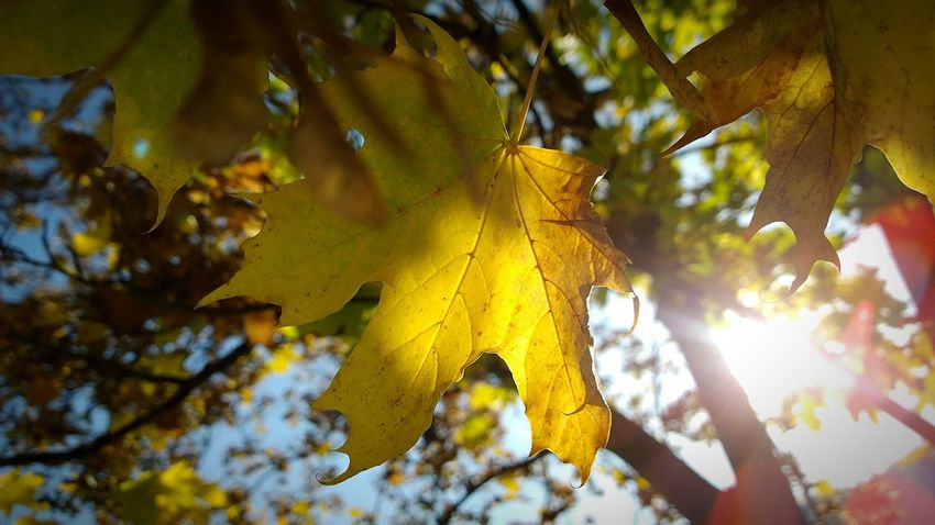First Eyeem Photo Autumn Leaves Playing With Sunlight