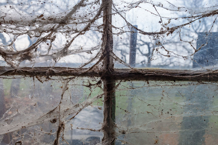 Abandoned Places Barn Cross Looking Out Of The Window Spooky Atmosphere Abandoned Beauty In Nature Branch Close-up Day Dirty Nature No People Old Outdoors Spider Web Spooky Tree Tree Trunk Window