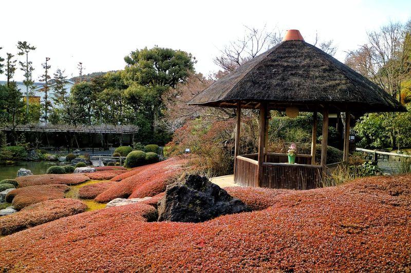 Early Spring Spring Springtime Kyoto Temple Kyoto,japan Kyoto Garden