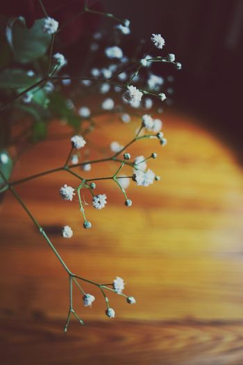 Nature Focus On Foreground Close-up Beauty In Nature No People Growth Day Tree Branch Outdoors Flower Fragility Freshness The Great Outdoors - 2017 EyeEm Awards Live For The Story