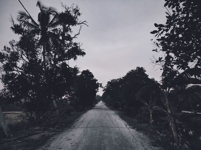 The end of road that my eyes can't see. Honor 8 Honorphotography HuaweiMalaysia Photography Traffic Backgrounds Nature Malaysia Scenery Cloud - Sky Malaysia Huaweiphotography Day Lifestyles Outdoors Shadow No People Silhouette Sky Tree Road Rural
