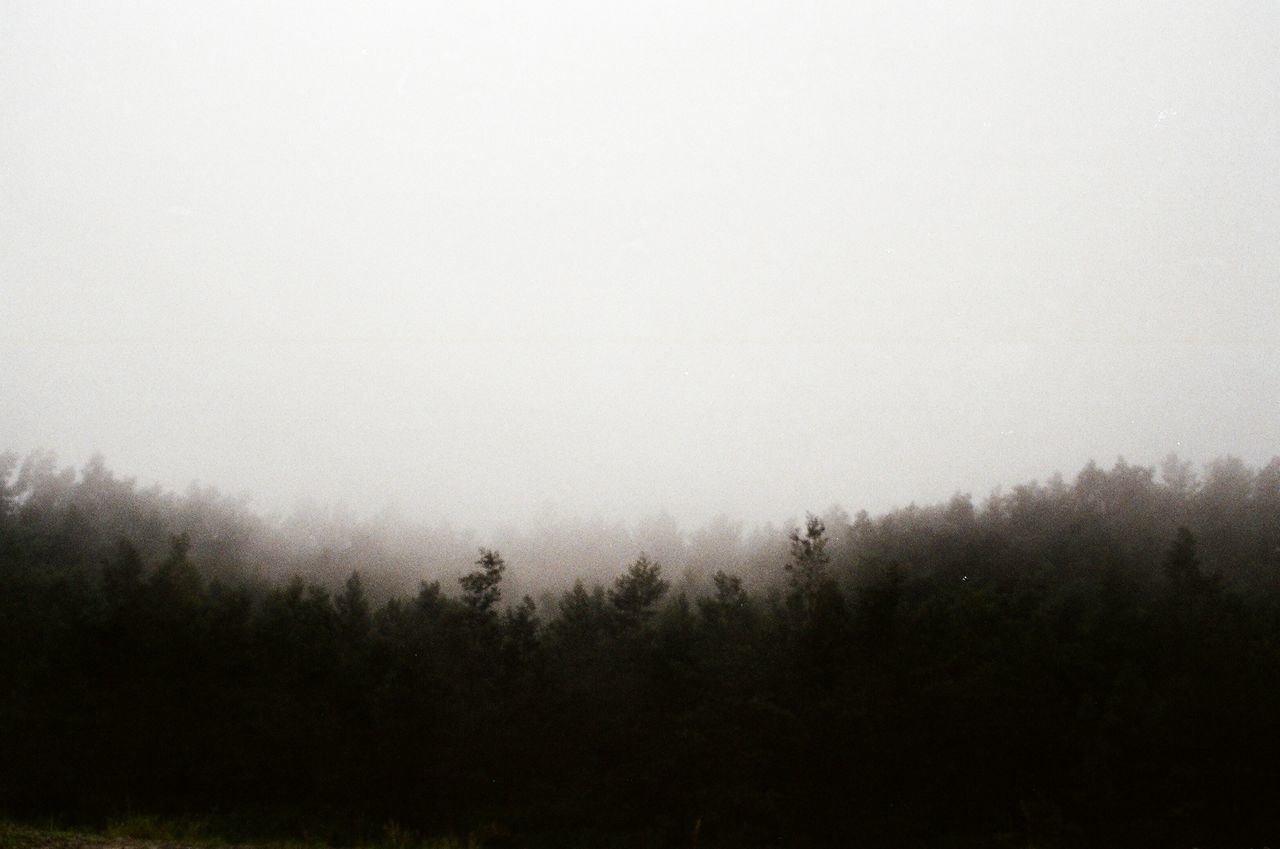 fog, tree, nature, tranquility, mist, hazy, landscape, beauty in nature, tranquil scene, foggy, scenics, no people, outdoors, idyllic, grass, day, growth, forest, sky