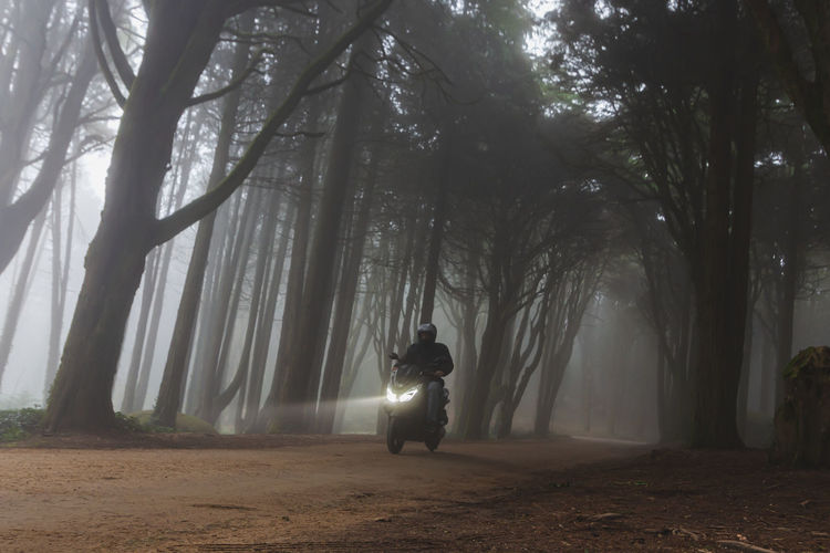 Rear view of man amidst trees in forest