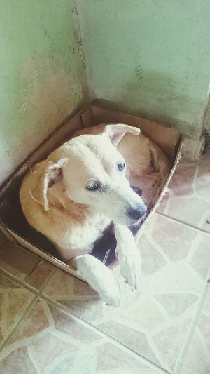 Lassie Dog Cachorro First Eyeem Photo EyeEmNewHere