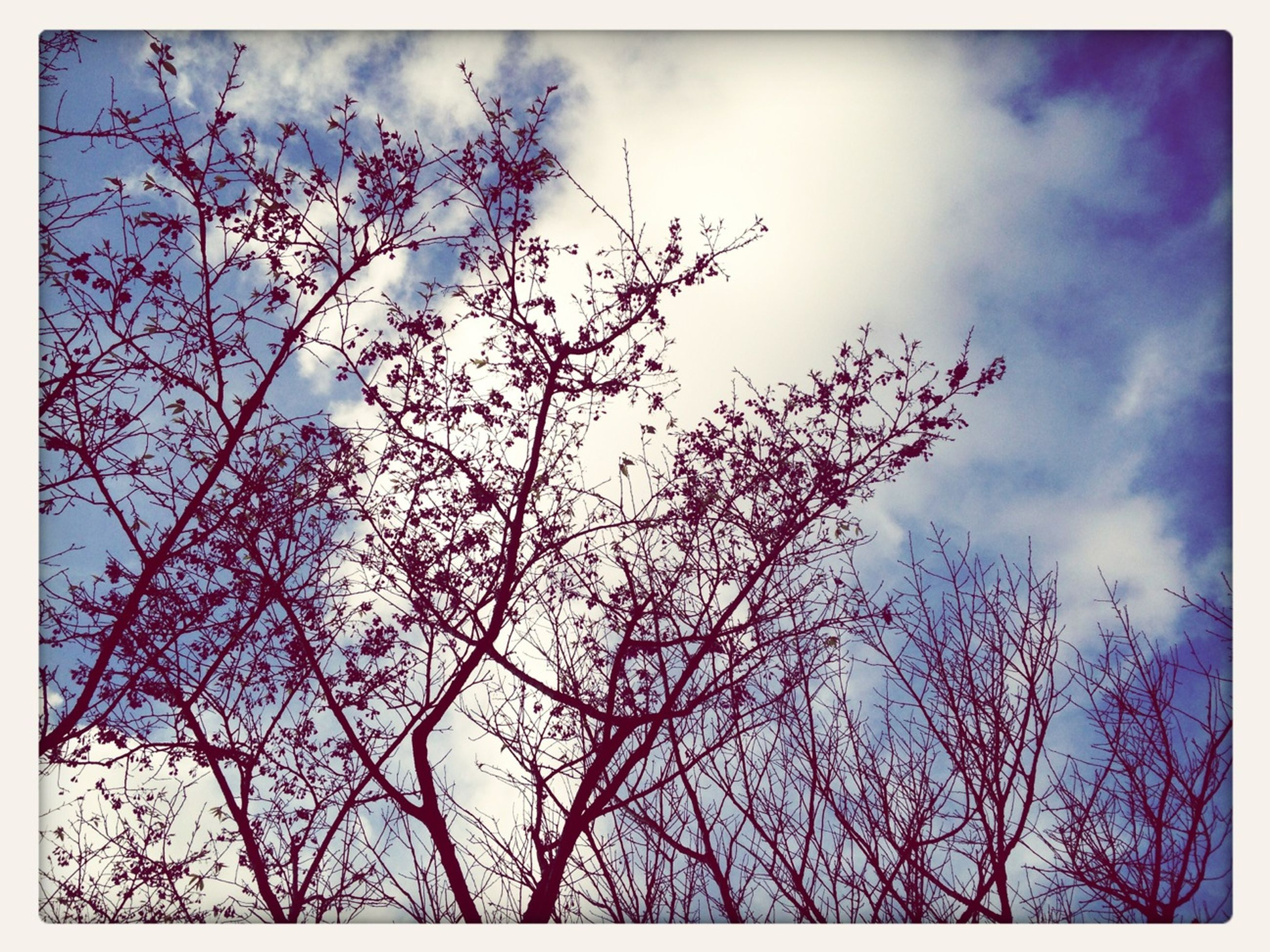 flower, low angle view, sky, growth, transfer print, tree, branch, beauty in nature, auto post production filter, freshness, nature, cloud - sky, fragility, pink color, blossom, cloud, blue, outdoors, blooming, day