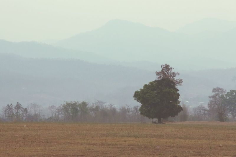 Mountains Tree Outdoors Warm Colors No People Beauty In Nature Nature Solitary Fall Season in Pai Thailand North Thailand South East Asia
