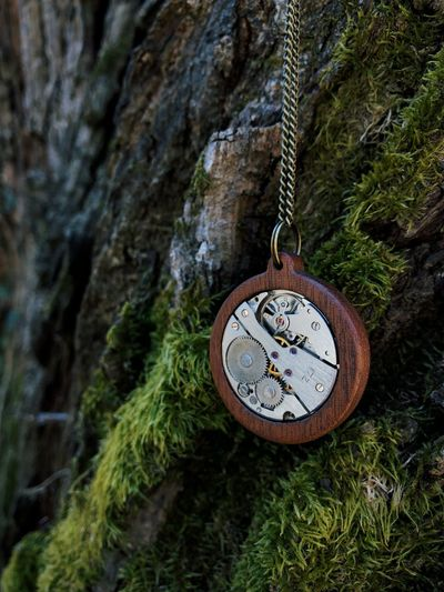 Close-up of clock on rock against tree trunk