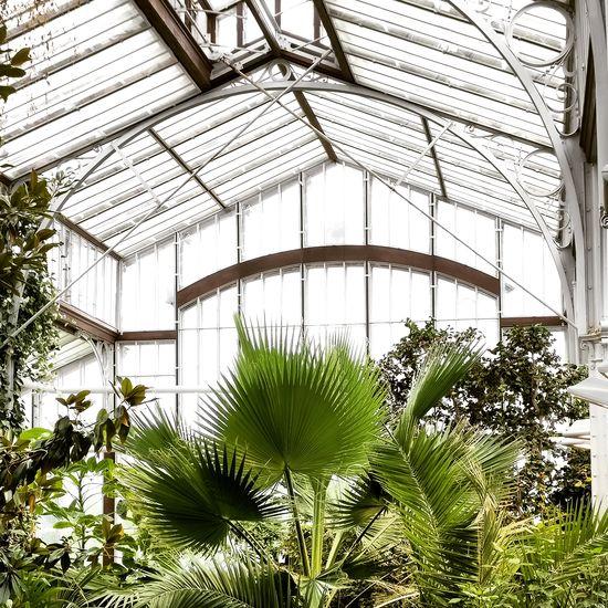 Botanical Botanical Gardens Plants Green House Tropical Glass - Material Glass Winter Garden Garden Garden Photography Garden Architecture Helsinki Bright Sunny Paradise Elements Of Style Mondaze