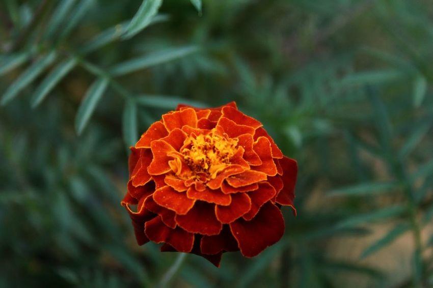 Flowers Cute Love Nature