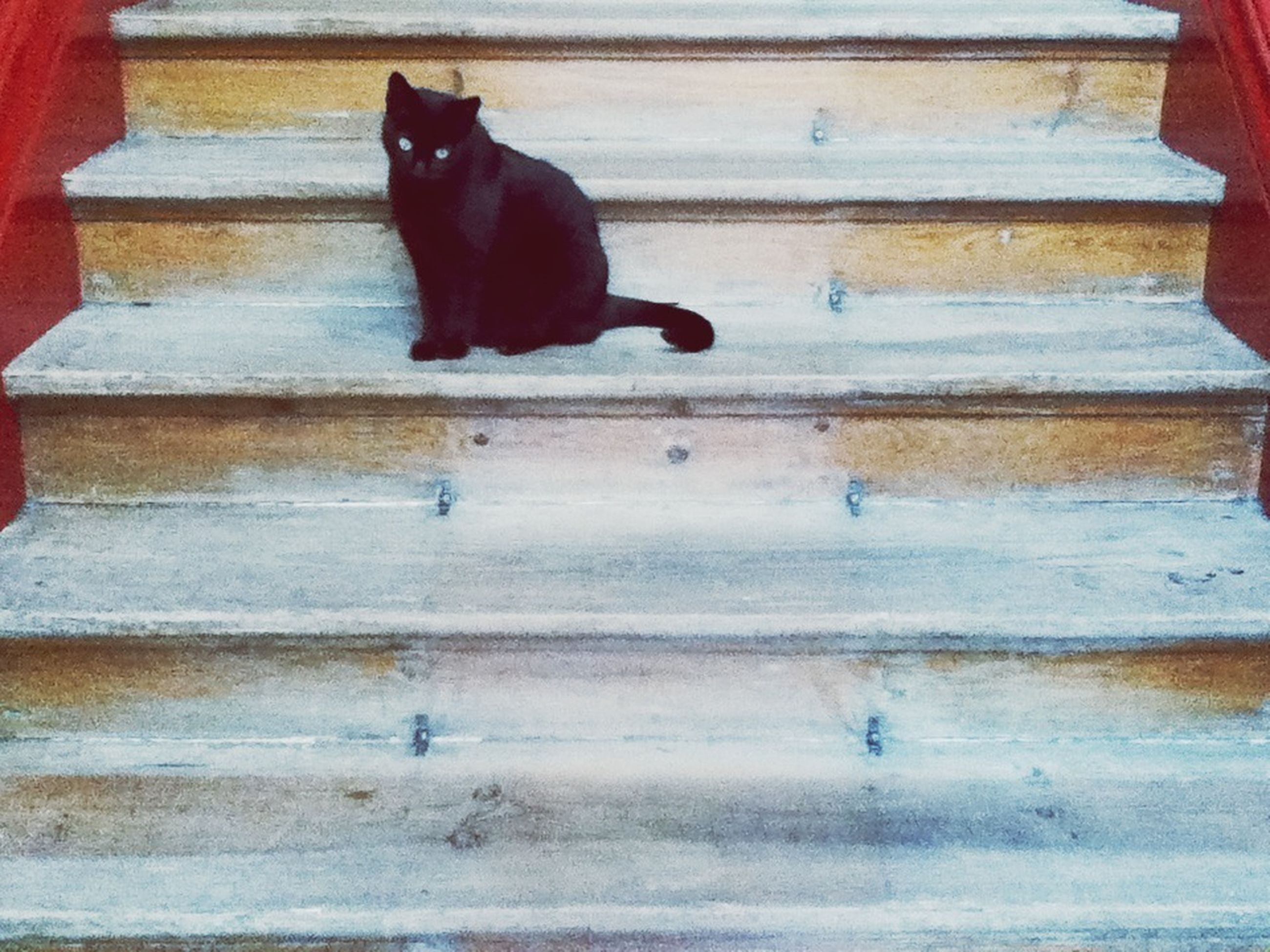 domestic animals, pets, animal themes, mammal, one animal, domestic cat, cat, dog, feline, relaxation, black color, indoors, resting, zoology, animal, no people, lying down, wood - material, vertebrate, two animals