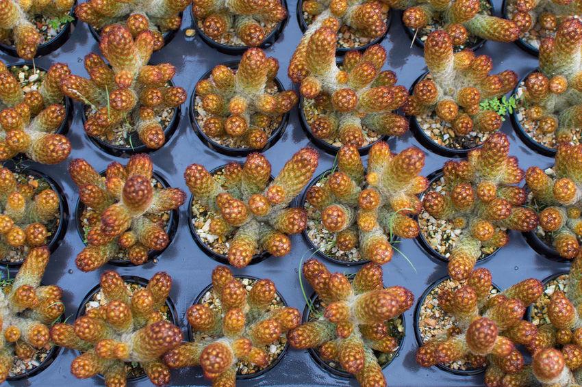 Cactus Plant Seletive Focus Freshness Nature Growth Growing Garden Farm