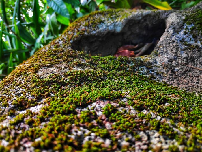 Describe what you see in this photo. What feeling does it inspire you ? Nature Reserve Moss Awe Close-up Grass Landscape Plant Lichen Wildflower Uncultivated Prickly Pear Cactus Dandelion Flora In Bloom Dandelion Seed Poppy Fungus Toadstool Growing Fly Agaric Mushroom Mushroom Blooming Fly Agaric Hiker Lush - Description My Best Photo