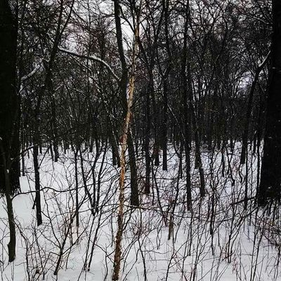 Walking, Wondering, Winter Taking Photos Winter Tree Enjoying Life Hanging Out Photography Relaxing Check This Out