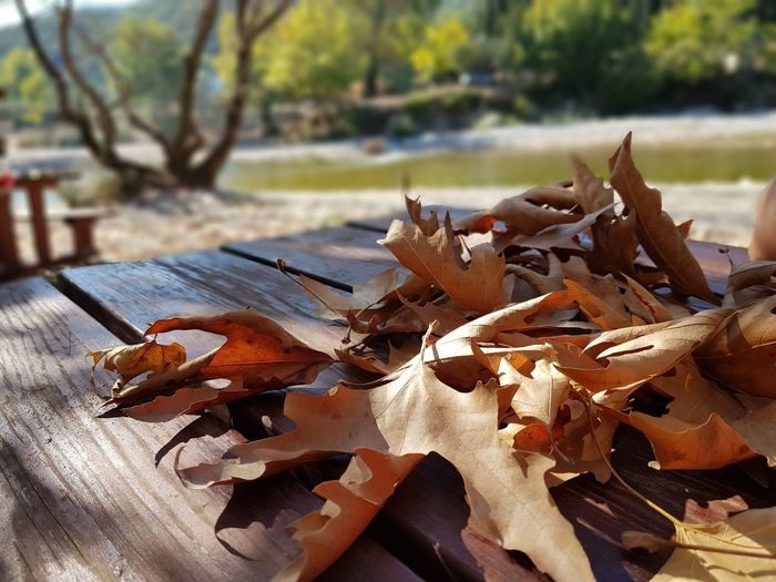 Close-up of leaves on table