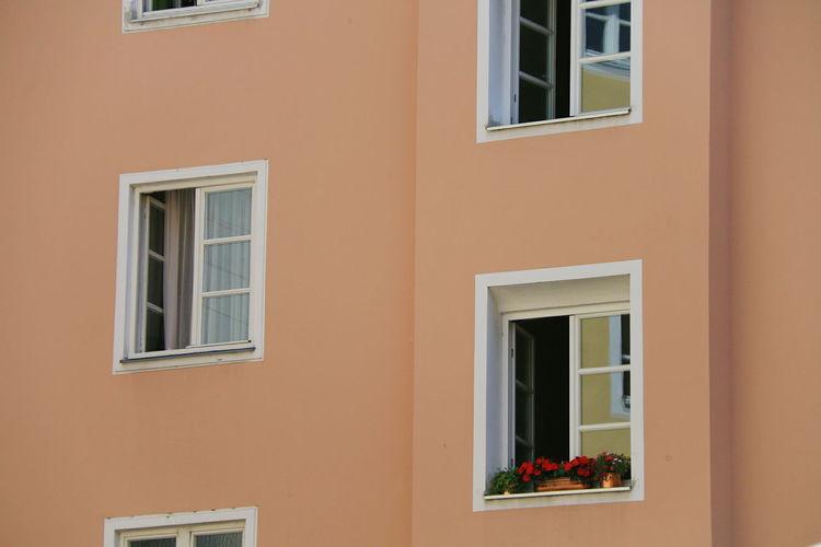 Window Flower Architecture Built Structure The Week On EyeEm EyeEm Nature Lover Summer EyeEm The Graphic City