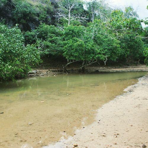 Tempat berkubang para reptil. Pulaukomodo Nusatenggaratimur INDONESIA