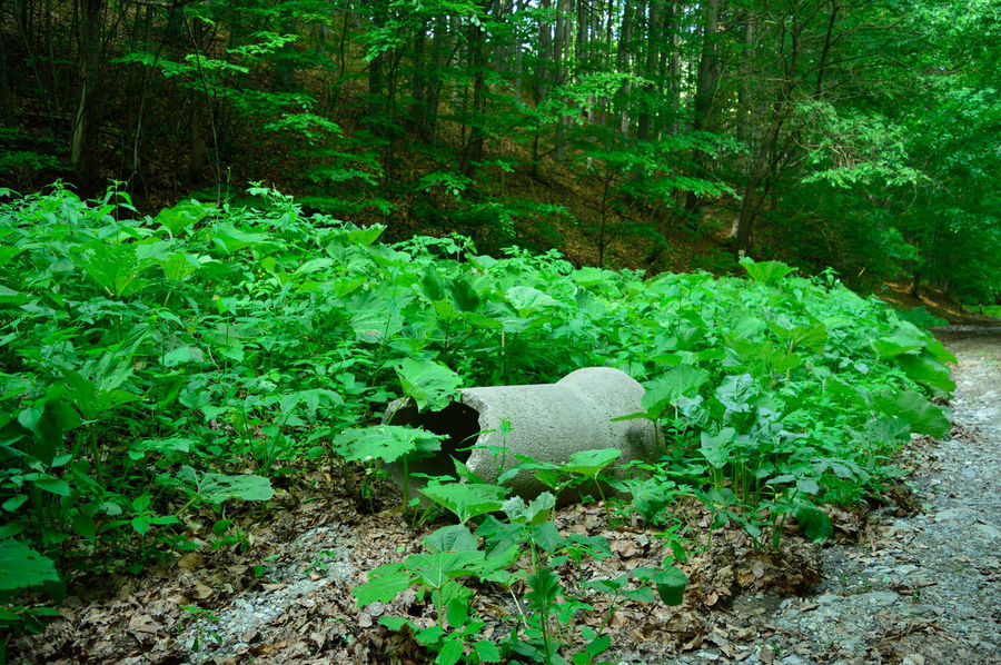 Concrete waste in the woods Concrete Concrete Jungle Forest Leaf Nature No People Outdoors Plant Tree Waste Waste In Nature