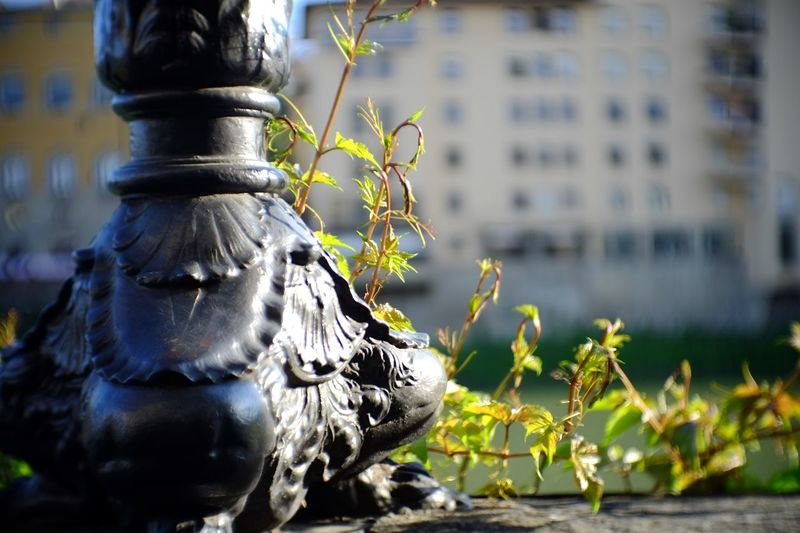 Close-up of statue against fountain