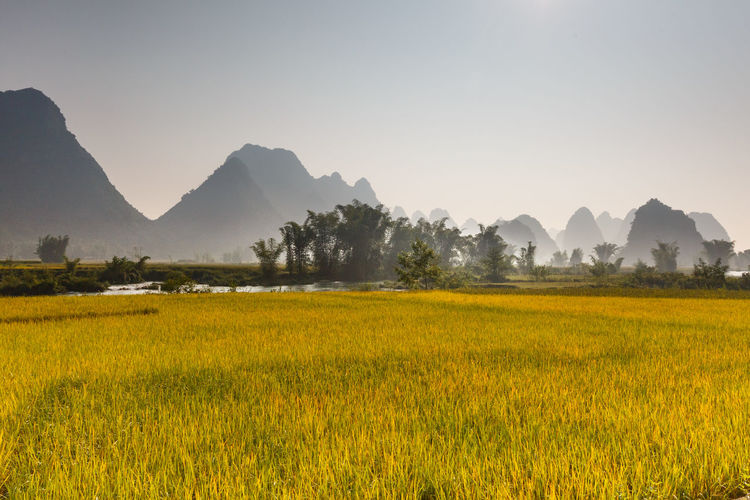Rice field in Cao Bang province. Caobang is North East province of Vietnam near China Field Grows Horticulture Agriculture Caobang Corn Ecology Environment Ethnic Harrow Lake View Land Landscape Minority Mountain Nature No People Outdoors Rice Scenic Sunrise Terraced Field Traditional Travel Village