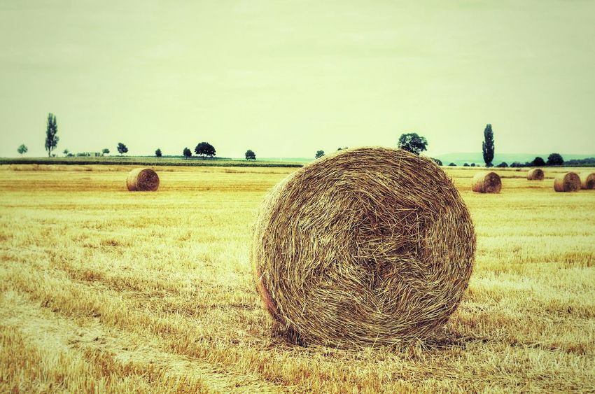 Golden Grain Summer Grainfields Golden Fields Landscape Hanging Out Relaxing Check This Out Faces Of Summer