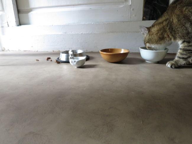 Cat Feeding  Bowls Lowlight Grey Inside The Moment - 2015 EyeEm Awards Eye4photography  EyeEm Nature Lover TCPM