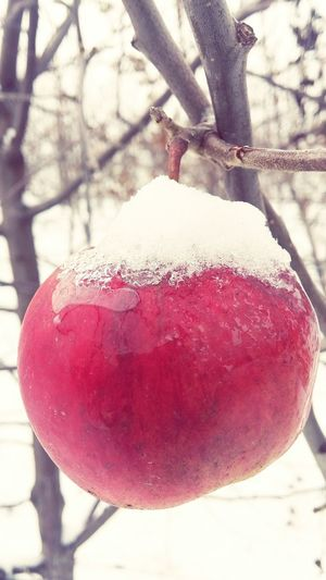 Nature Close-up Day Life Apple Winter Wintertime Snow Freezing Livingplanet Ice Orchard Beautiful Nature