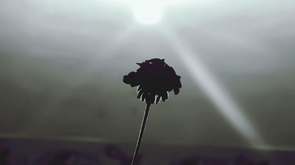 flor-enciendo. Monochrome Flower Flor Blancoynegro