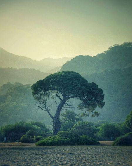 Sunset Mountain Tree No People Landscape Nature Sand Green Color Green Outdoors Day Foggy Elephant Dinosaur Water Extinct
