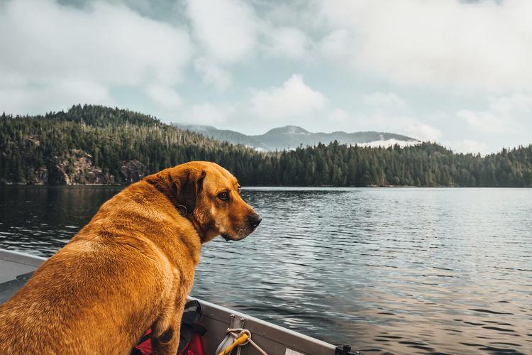 Dog looking at lake against sky