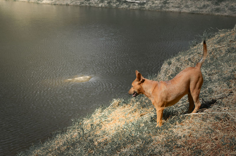High angle view of dog on lake
