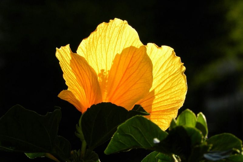 Flower In The Sun Nature Photography Naturelover Flower Collection Beautiful Nature Flowers Hibiscus Flower