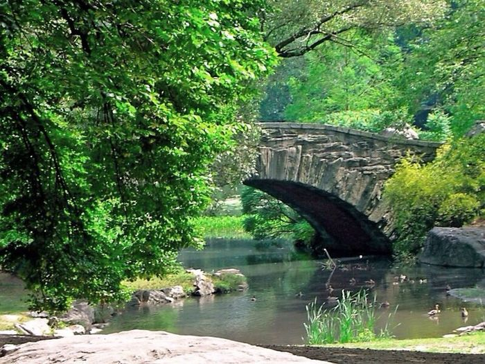 New York ..NYC .. CentralPark Bridge From Where I Stand