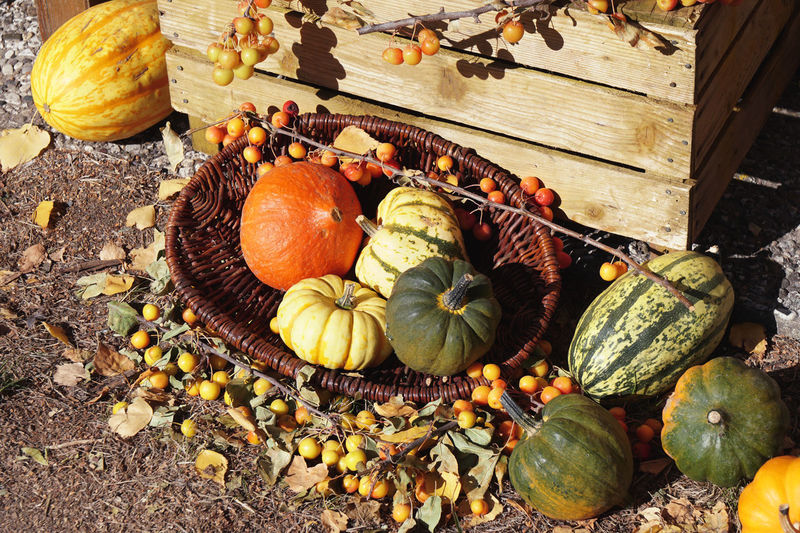 Autumn Rustic Thanksgiving Basket Food Food And Drink Fruit Harvest Large Group Of Objects No People Organic Outdoors Pumpkin Squash - Vegetable Still Life Vegetable