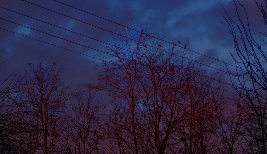 Background Photography Blueclouds Bluelights Blueshadow Blurry Lights Inthebackyard Landscape_Collection Landscapes Lights No People Outdoors Saturated Shadows Shine Sunrise Trees Trees And Sky Wind