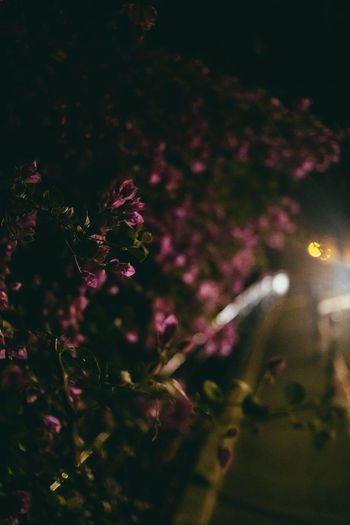 Close-up of flowering plant by tree at night