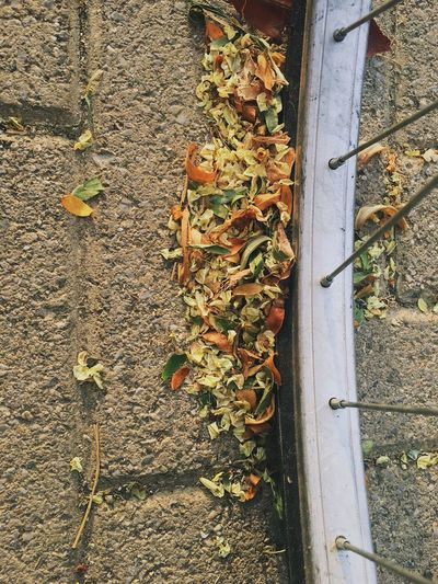 High angle view of dry leaves on footpath