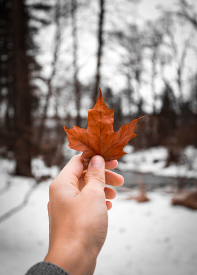 Winter Snow Sky Beauty In Nature Leaf Macro Magic Beautiful Calm Maple Autumn Collection Frost Fall Fallen Leaves Weather Condition Maple Tree My Best Photo